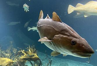 I disse områdene blir fiske forbudt etter nyåret