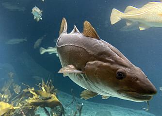 Her blir det helt forbudt å slippe ut fiskesnøret etter nyåret